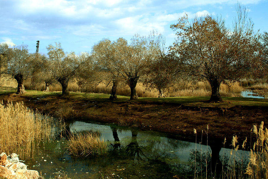 Waterscape Photograph - Reflections by Georgi Bitar