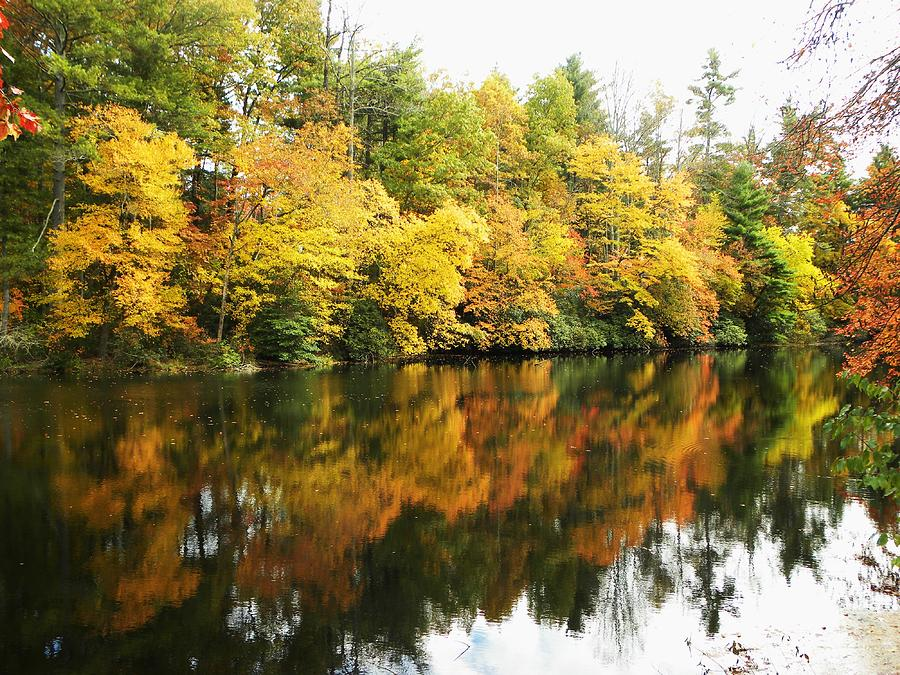 Fall Photograph - Reflections II by Cindy Gacha