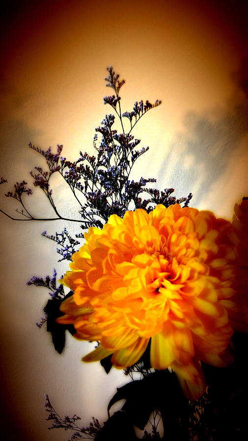 Flower Photograph - Reflections In Orange by Bobbie Barth