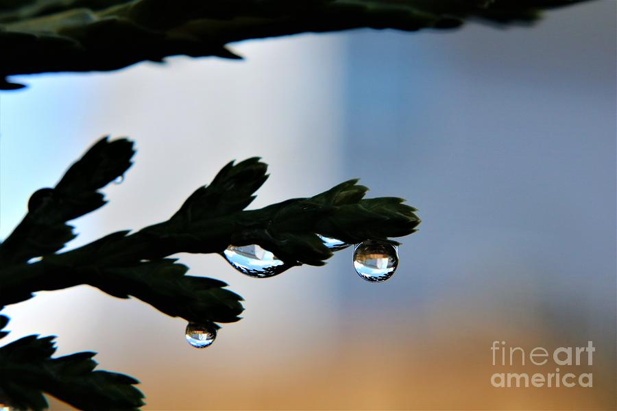 Reflections In Raindrops Photograph