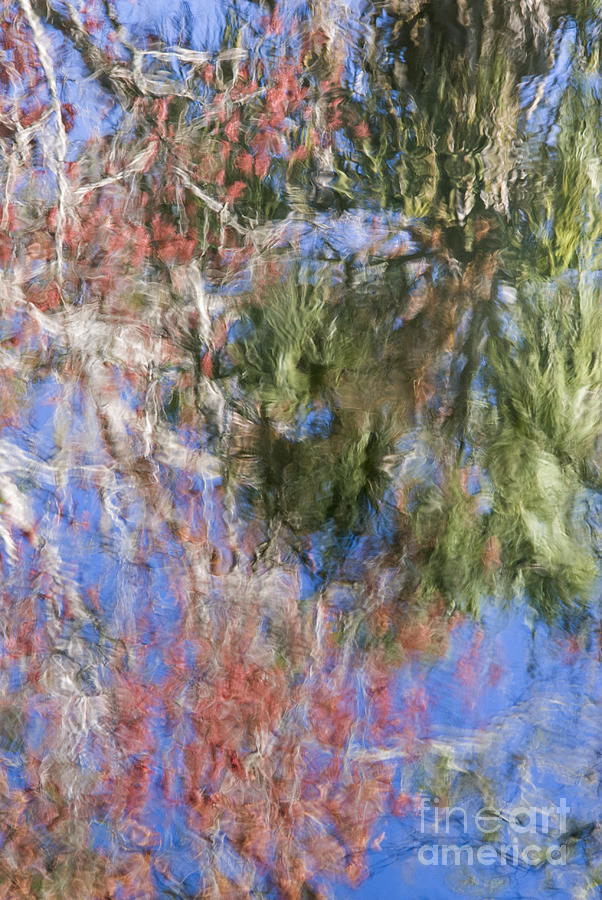 Abstract; Blue Water; Bright Colors; Cabbage Palm; Sabal Palmetto; Florida Native Trees; Hillsborough; Hillsborough River; Palm; Reflection; River; Swamp Maple; Acer Rubrum; Trees; Water Photograph - Reflections In The Hillsborough River by John Arnaldi