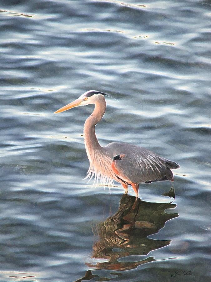 Bird Photograph - Reflections In The Water by Judy  Waller
