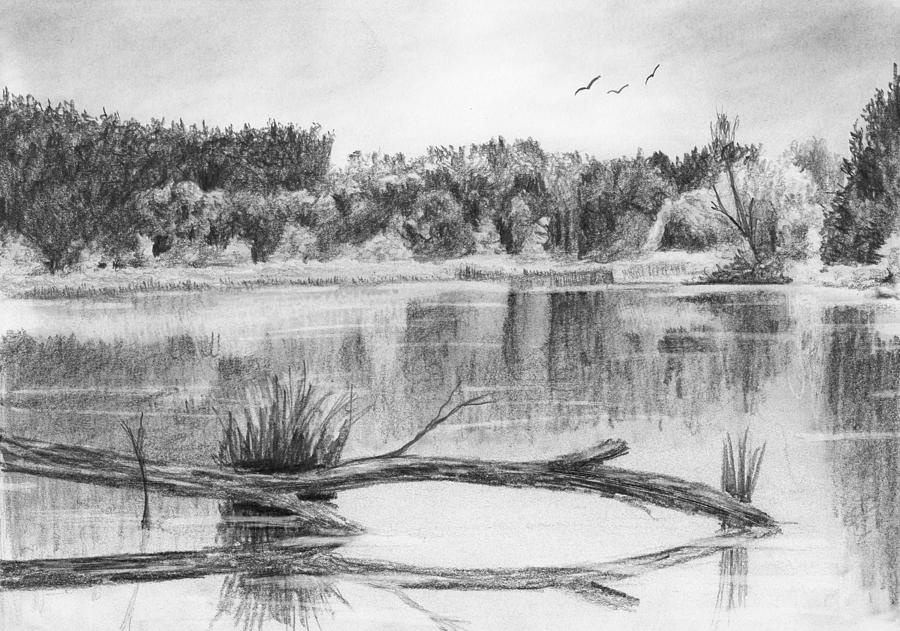 Pencil Drawing - Reflections In The Water by Nolan Clark