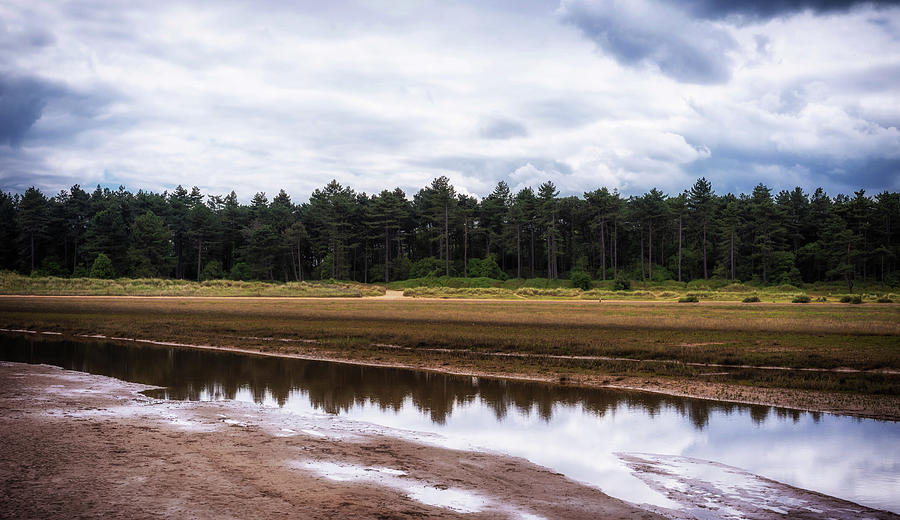 Woods Photograph - Reflections by Nick Bywater