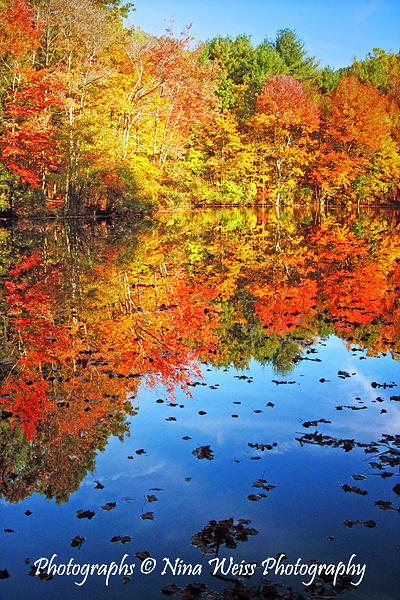 Reflection Photograph - Reflections by Nina Weiss