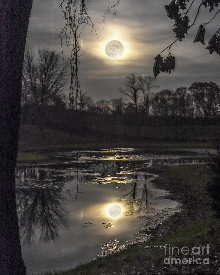 Super Photograph - Reflections Of A Super Moon by Lori Ann  Thwing