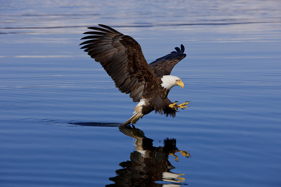 Afternoon Photograph - Reflections Of Eagle by John Hyde - Printscapes
