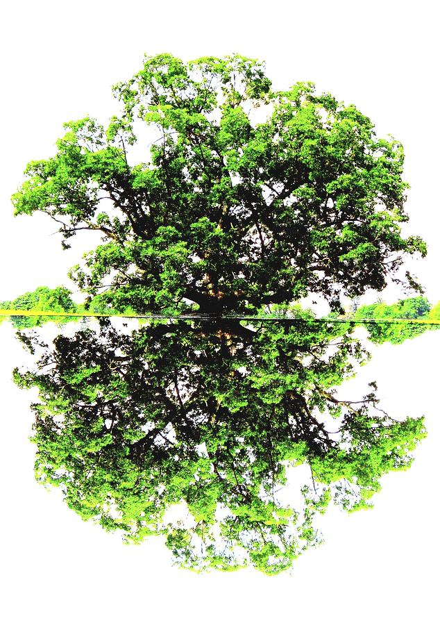 Trees Photograph - Reflections On Life by Angela Davies