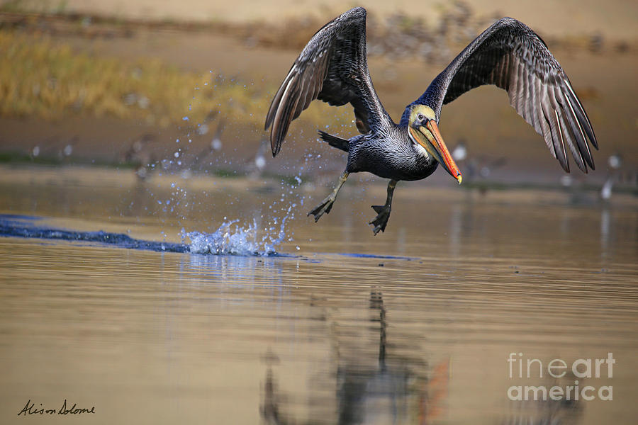 Reflections of Lift Off by Alison Salome