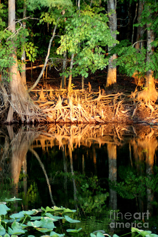 Roots Photograph - Reflections Of Our Roots by Lora Wood