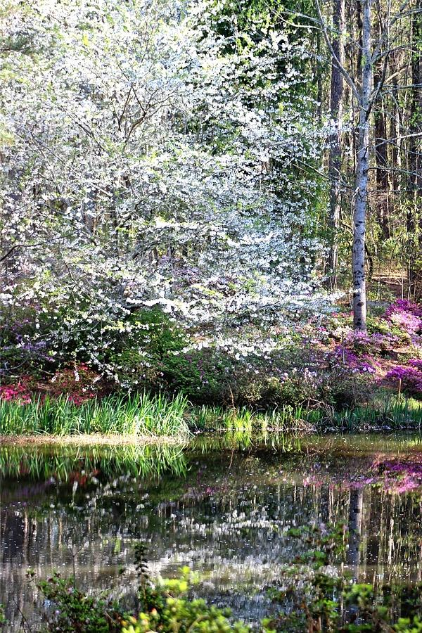 Gardens Photograph - Reflections Of Spring by Gayle Miller