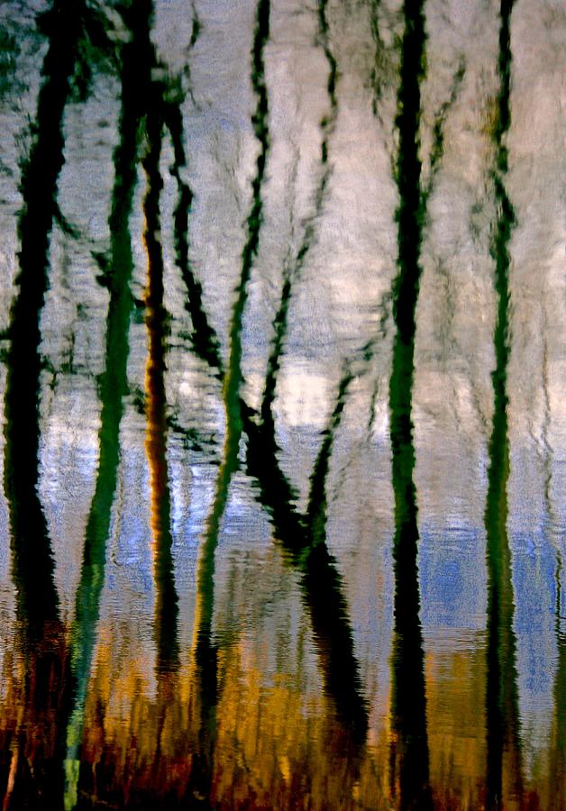 Landscape Photograph - Reflections Of The Forrest by Gillis Cone