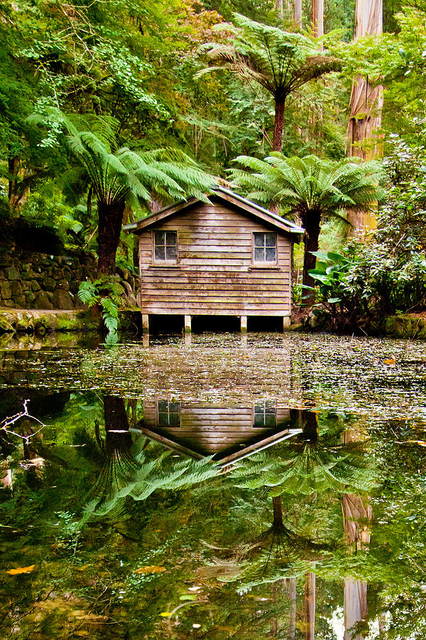 Dandenong Photograph - Reflections On The Pond by Az Jackson