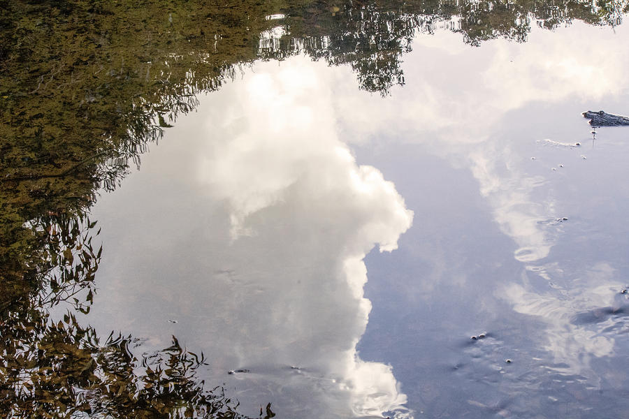 Reflections Photograph - Reflections On The Water by Tania Read