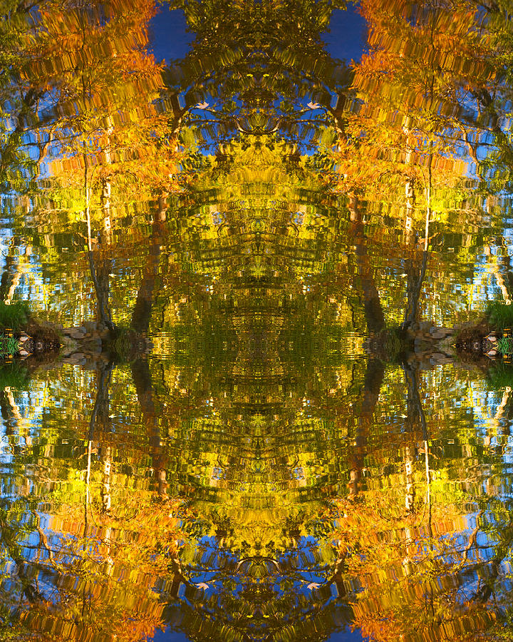 Abstract Photograph - Reflections Trees And Water by Bob Coates