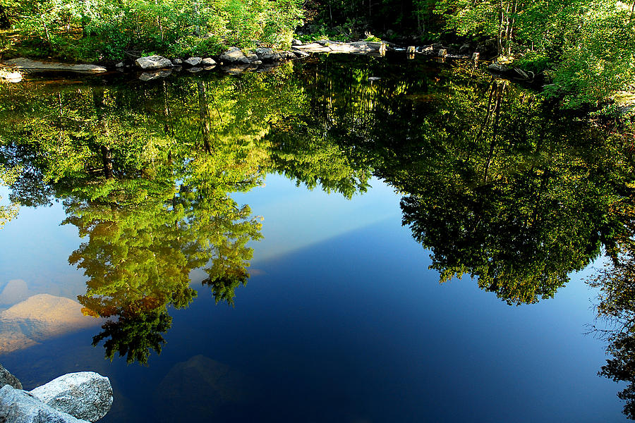 Trees Photograph - Reflections Trees by Greg Fortier
