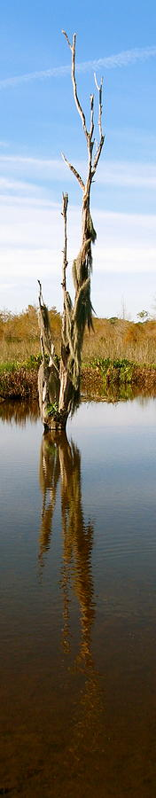 Branches Photograph - Reflexion Branch by Fanny Diaz