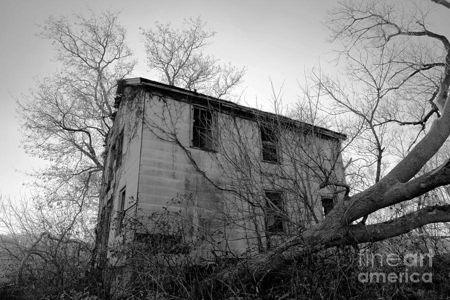 Ohio Photograph - Regrowth by Amanda Barcon