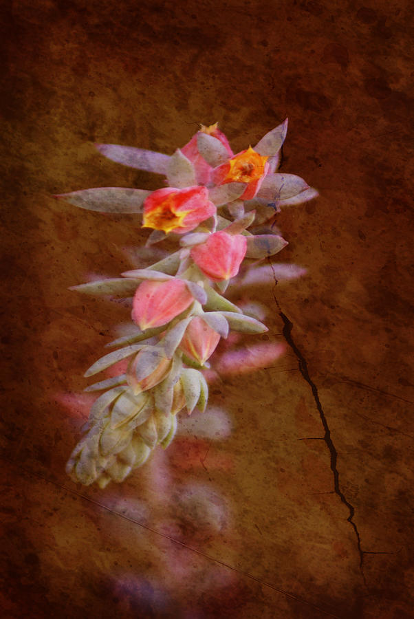 Flowers Photograph - Regrowth by Holly Kempe