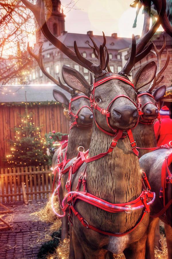 Reindeer Photograph - Reindeer At Copenhagen Christmas Market by Carol Japp