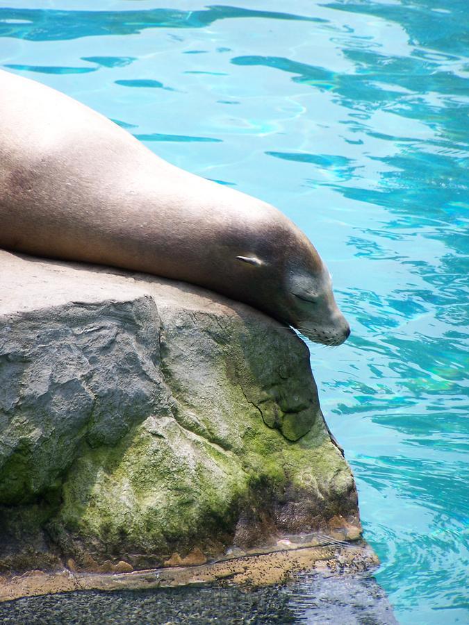 Sea Lion Photograph - Relax by Adam Schwartz