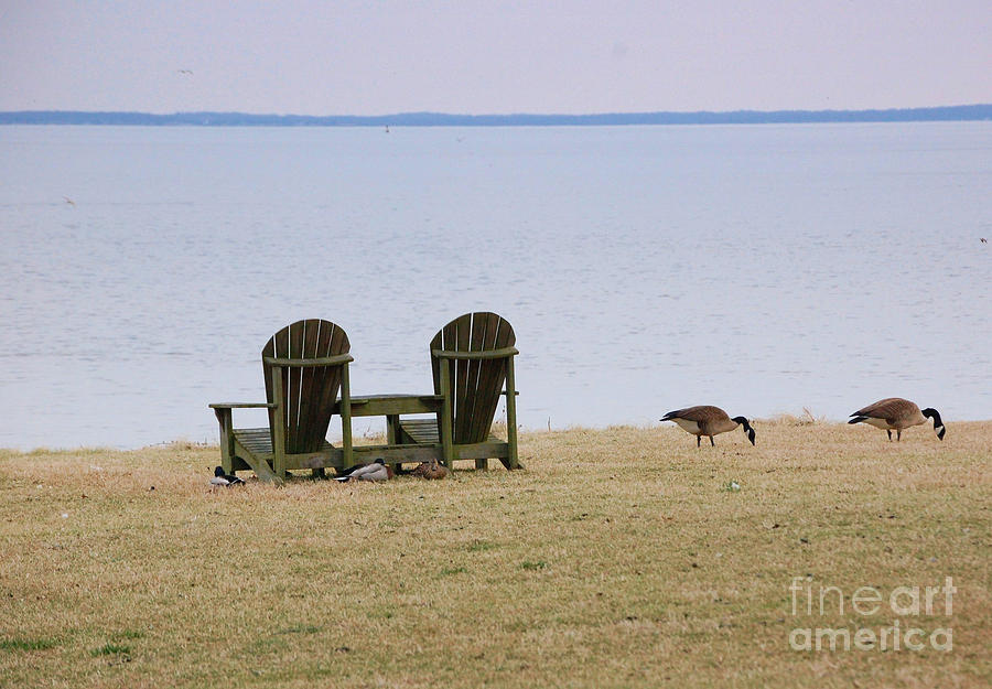 Chairs Photograph - Relax by Debbi Granruth