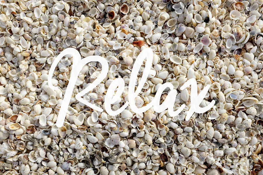 Florida Photograph - Relax Seashell Background by Edward Fielding