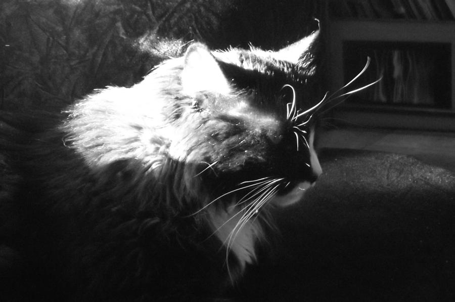 Relaxing Kitty Photograph