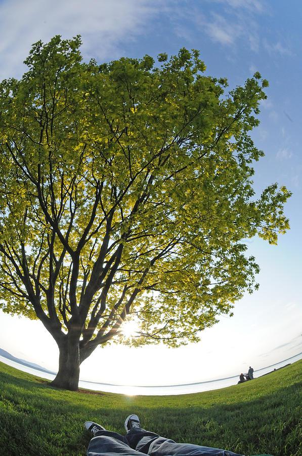 Tree Photograph - Relaxing Under A Tree by Matt McDonald