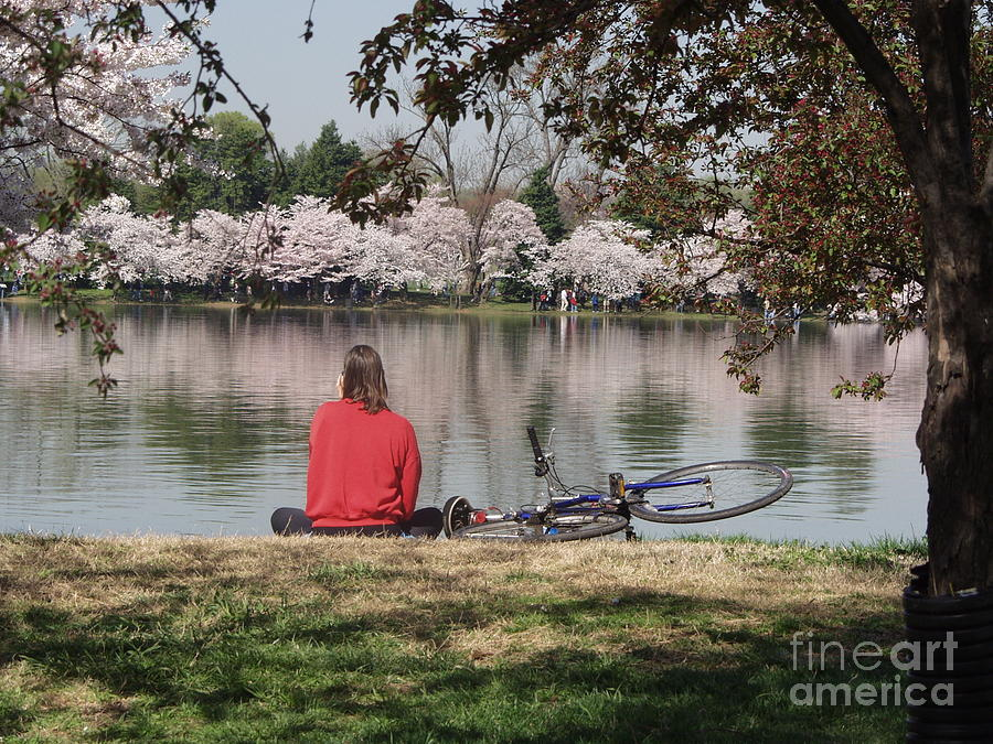 Bike Photograph - Relaxing Under Cherry Blossoms by April Sims