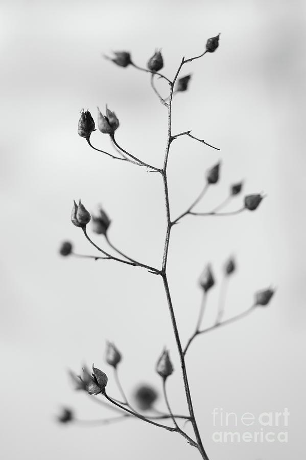 Dry Photograph - Remains by Gabriela Insuratelu