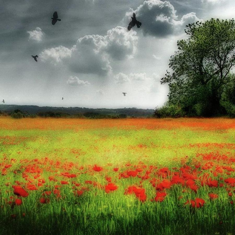 Remember Photograph - Remember #rememberanceday #remember by John Edwards