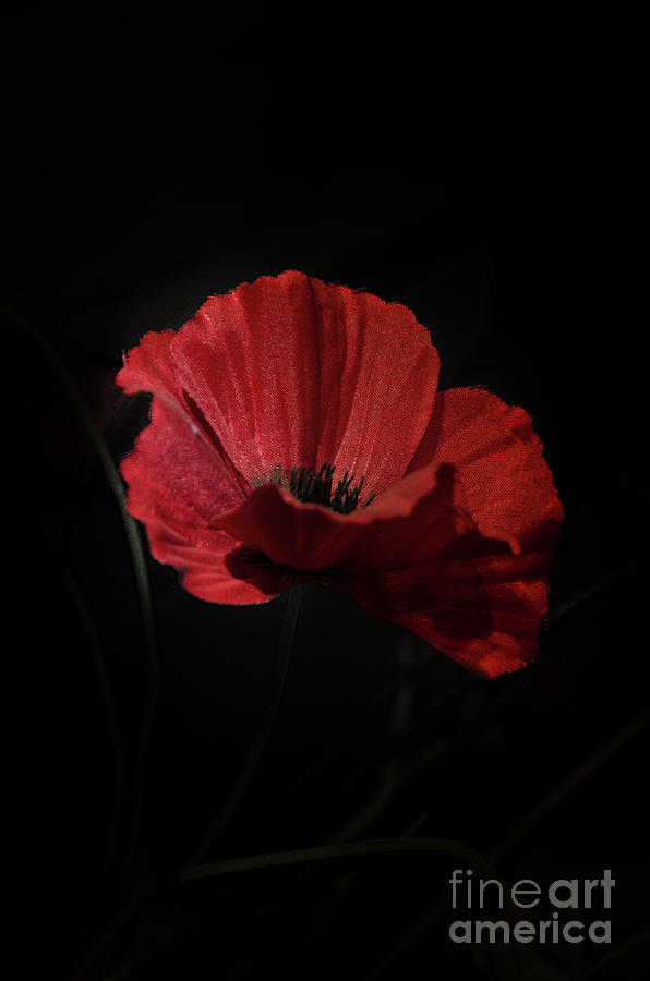 Remembrance Photograph - Remembrance Poppy 1 by Steev Stamford