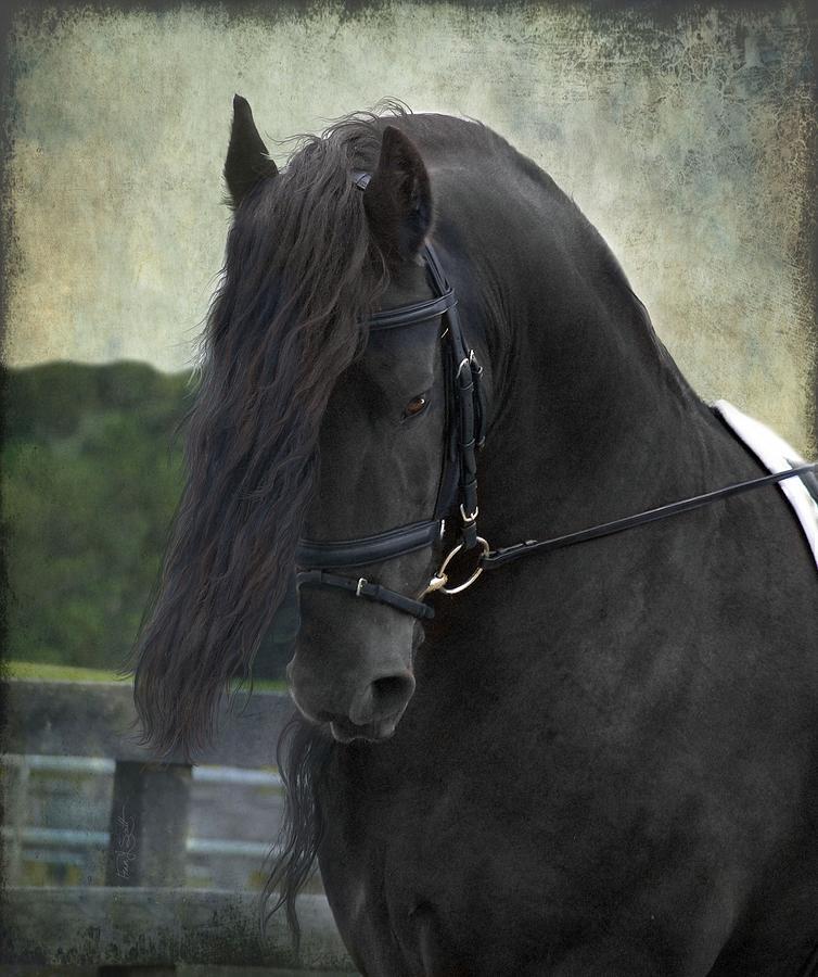 Horses Photograph - Remme by Fran J Scott