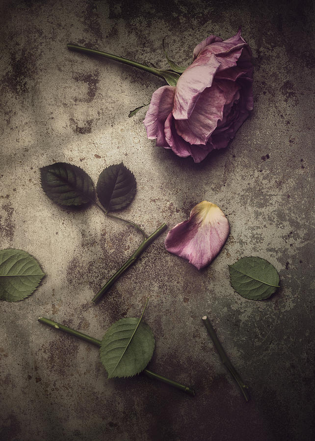 Rose Photograph - Remnants by Amy Weiss