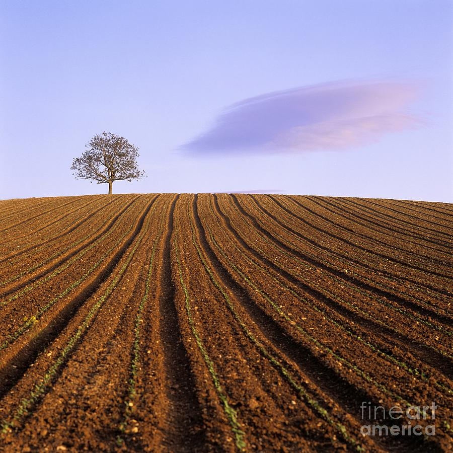 Agriculture Photograph - Remote Tree In A Ploughed Field by Bernard Jaubert