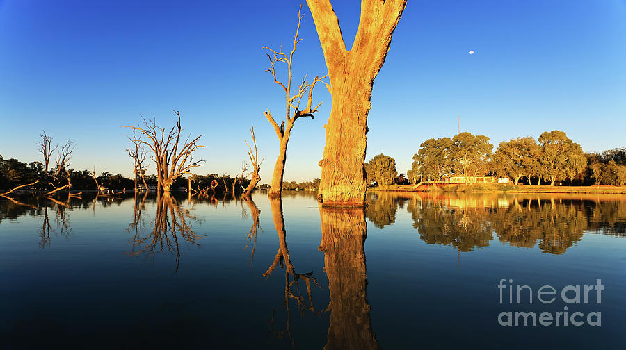 Renmark Murray River South Australia Photograph by Bill Robinson