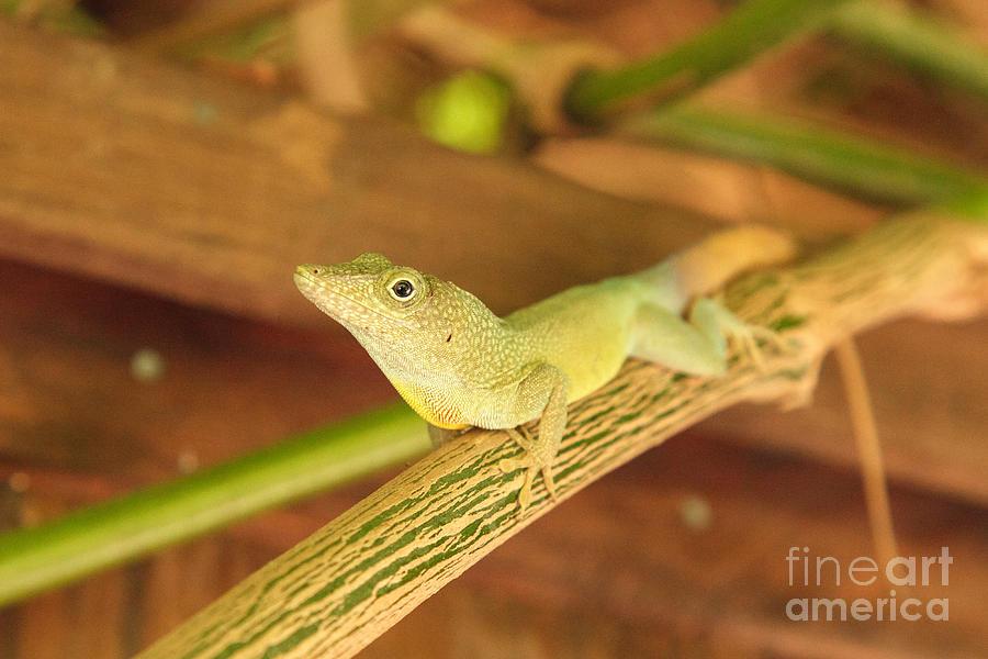 Reptilian Closeup by Charles Kozierok