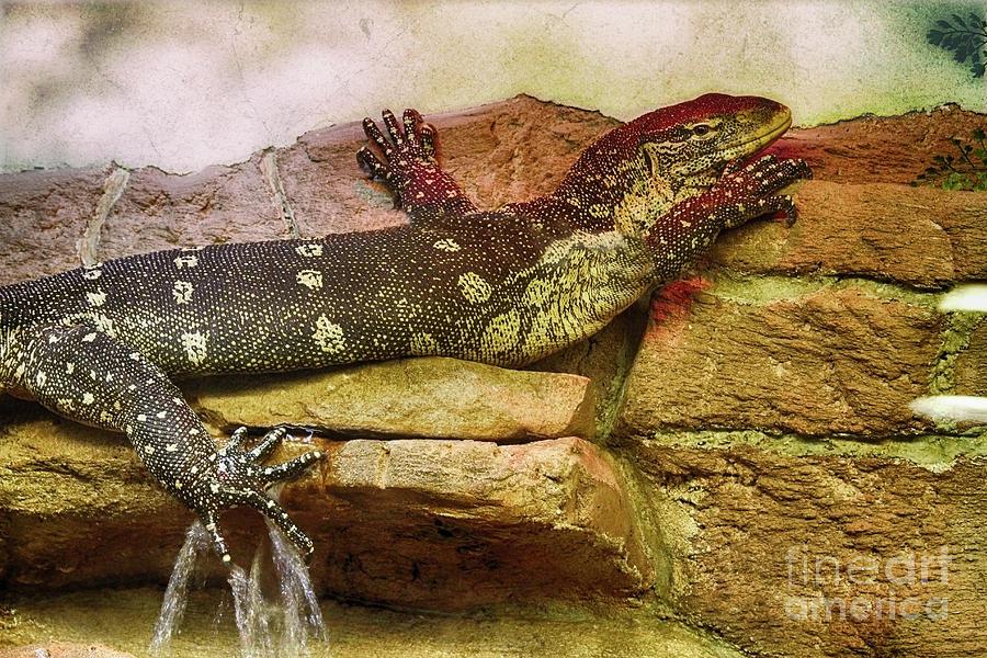 Reptiles Photograph - Reptilian Gothic  by Steven Digman