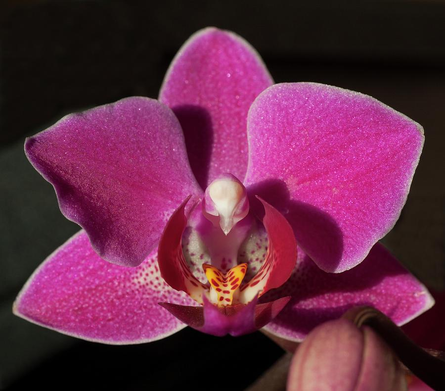 Rescue Orchid by Richard Thomas