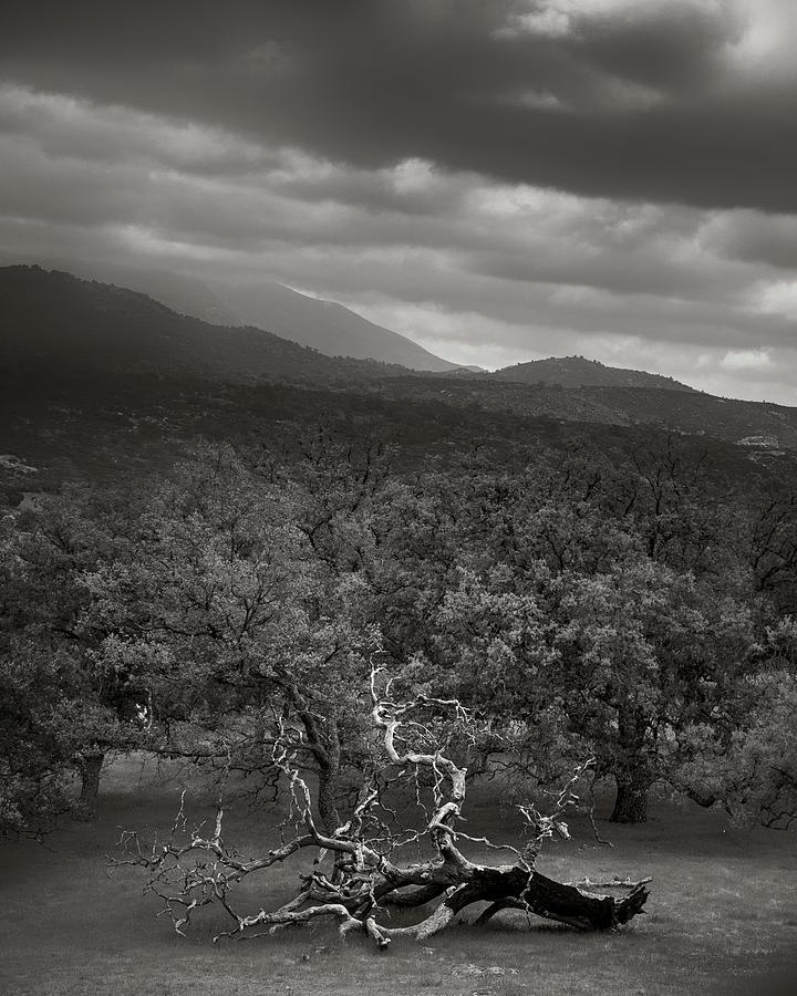 Santa Ysabel Photograph - Resigned by Joseph Smith