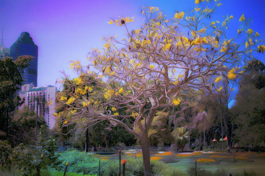 Tree Digital Art - Respite by Chris Hood