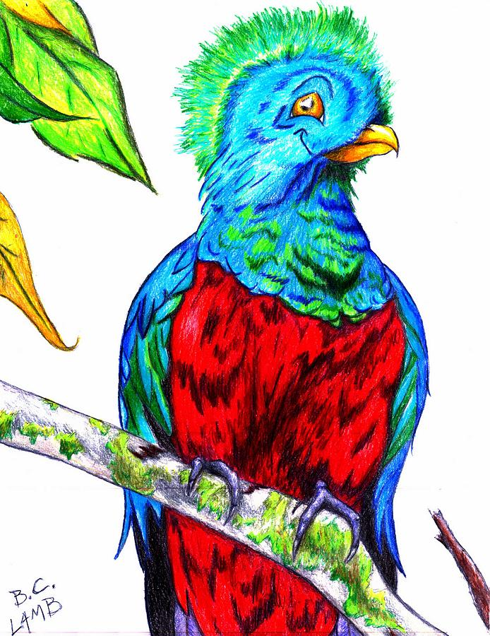 Bird Drawing - Resplendent by Bryant Lamb