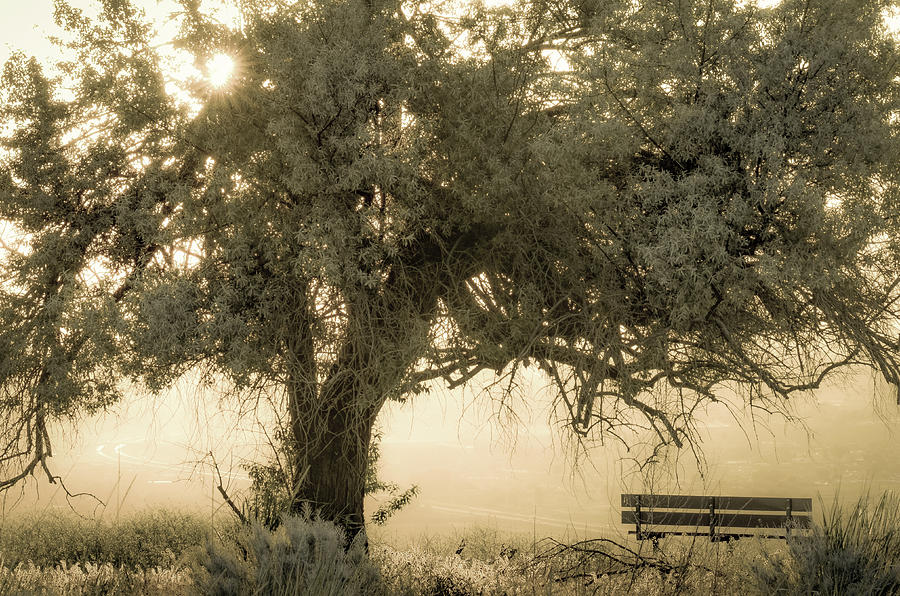Sit And Stay Awhile Photograph By Joy Mcadams