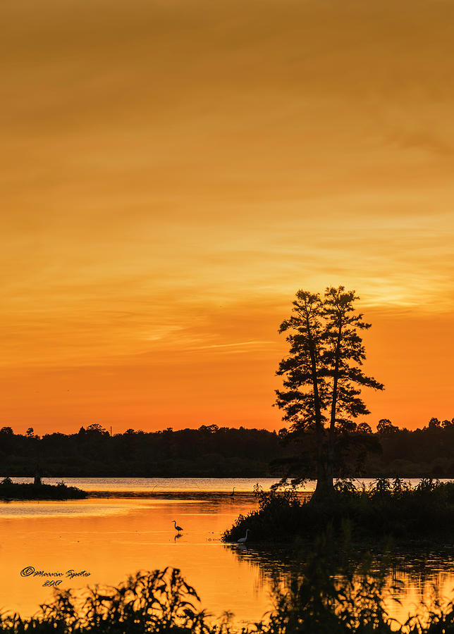 Cypress Photograph - Restful Night by Marvin Spates