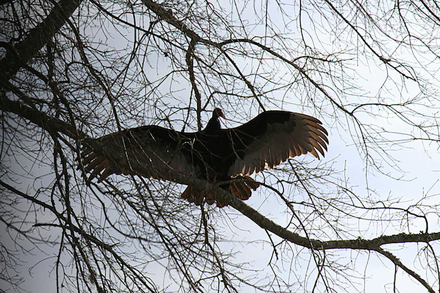 Bird Photograph - Resting by Carol Phipps