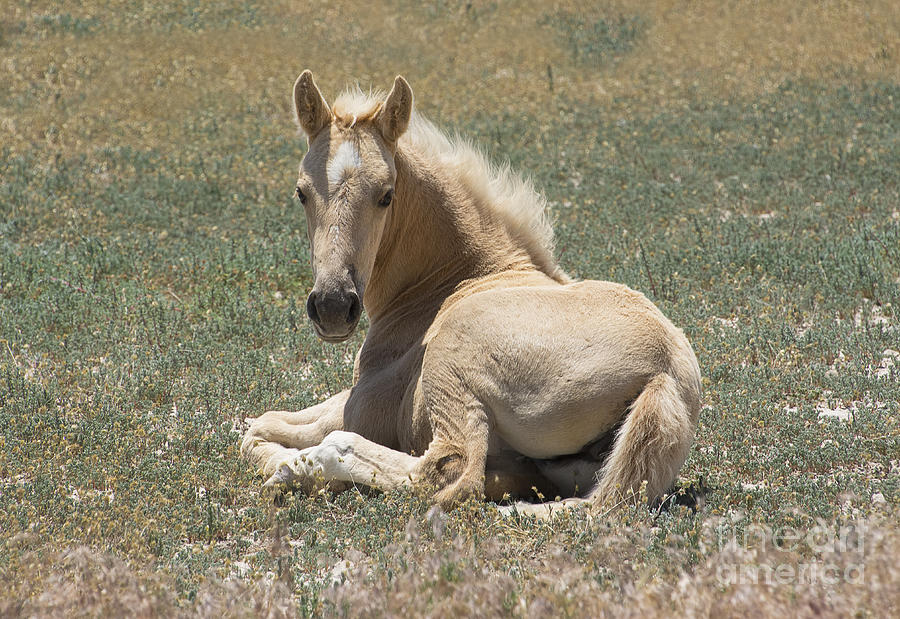 Nikon Photograph - Resting Filly by Nicole Markmann Nelson