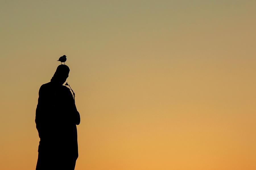 Minimalism Photograph - Resting Gull by Martin Vorel Minimalist Photography