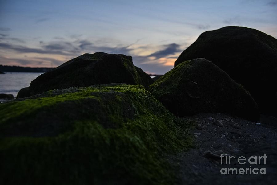 Rocks Photograph - Resting With The Moss by Stephanie  Varner