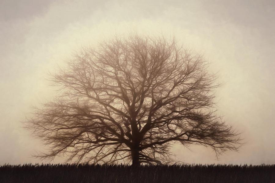 Retro Photograph - Retro Foggy Tree by Lori Deiter